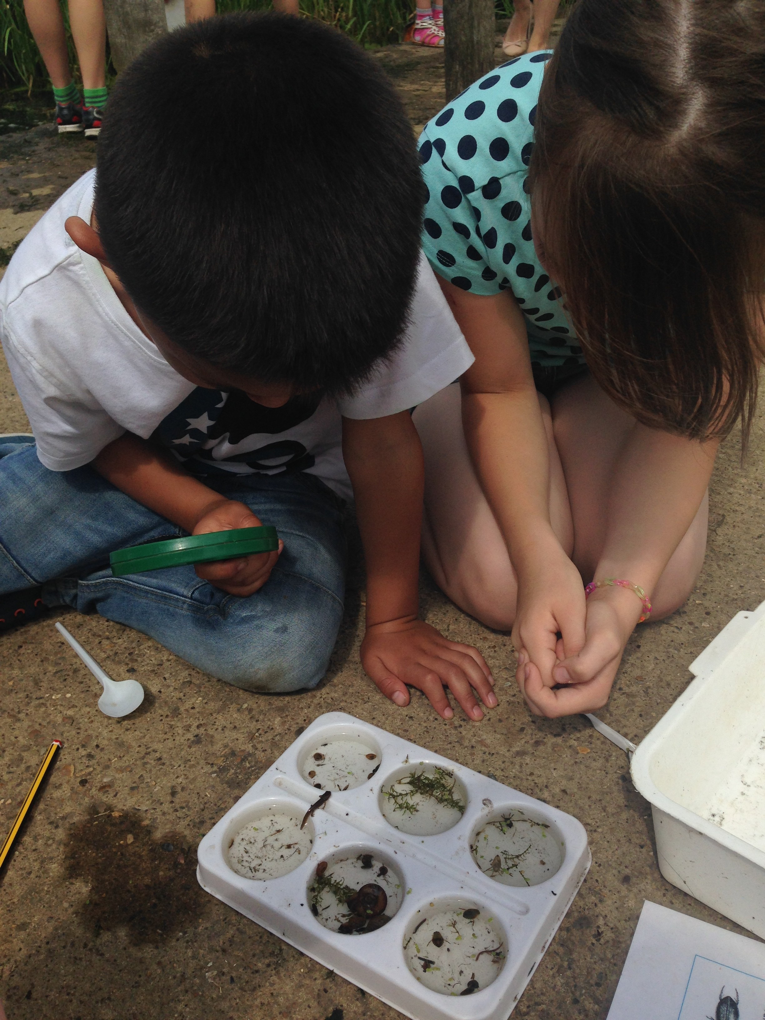 Pond Dipping at Ferry Meadows - What will you find?